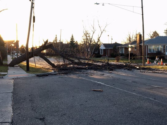 A tree lays over a street in Royal Oak.