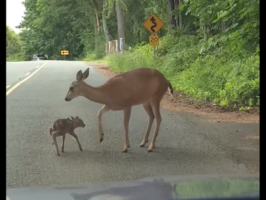 636634840802566245-fawn.png