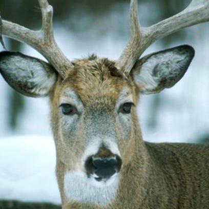 The 2015 deer hunting season has had two fatalities