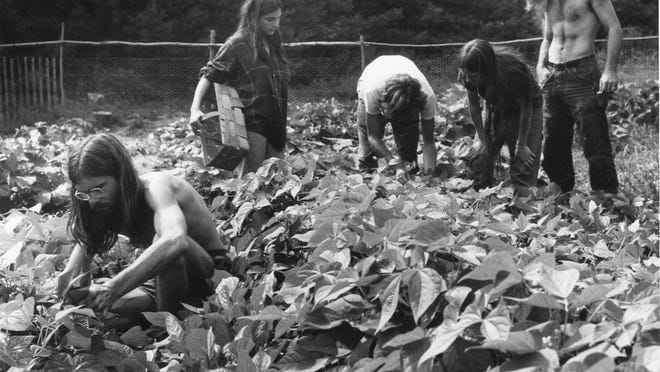 Pikes Falls community members work the fields in the 1970s.