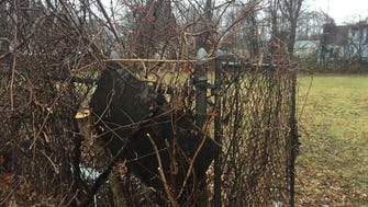 Vegetation has claimed a fence that borders a vacant lot at 67 Apple Street in Tinton Falls.