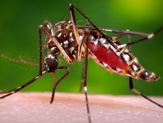 LCJBrd2-06-09-2017-KY-1-A010--2017-06-08-IMG-AP-MED-ZIKA-MOSQUITO-1-1-MUIKND0S-L1043959997-IMG-AP-MED-ZIKA-MOSQUITO-1-1-MUIKND0S.jpg