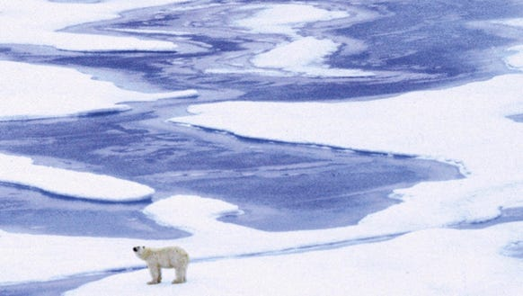 Polar bears could be at risk if carbon emissions are