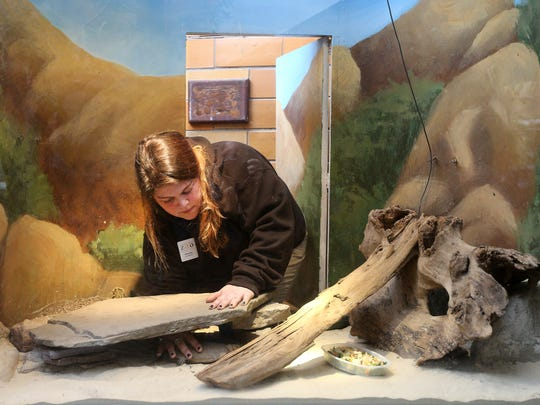 Nicole McEvily, a zoo keeper at the Seneca Park Zoo, rearranges a French Exhibit for some reptiles. The zoo will receive $13.5 million in the Monroe County budget for new construction projects.