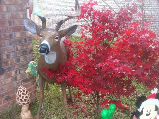 Deer decoy