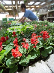 Sutherlands sales associate Myrna Lara adjust the plants