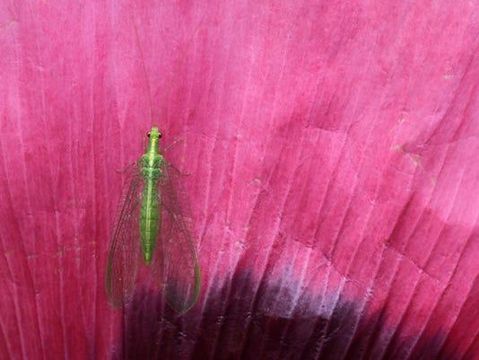 WA Bug