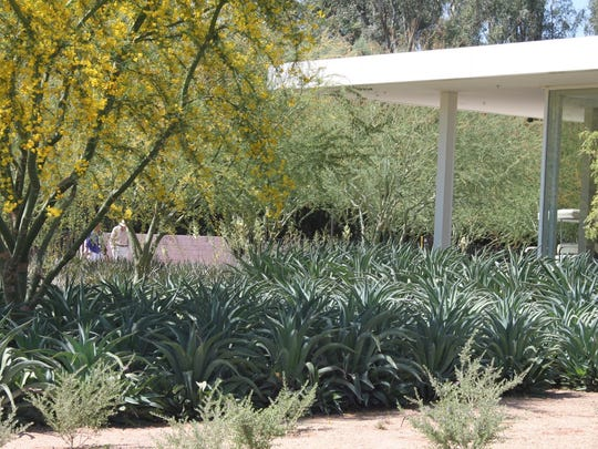 Agaves are an extreme example of this defense mechanism in hot dry climates.