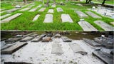 The Southwest Florida community responds to a call to action to restore a historic section of the Fort Myers Cemetery. The small and often unkept section is the final resting place of more than 40 veterans. 100 volunteers helped in clean up efforts.