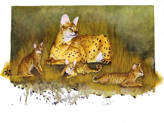 Serval Gimp by Alicia McNally.