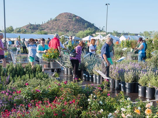 The bi-annual plant sales at Desert Botanical Garden attracts thousands of visitors each time.