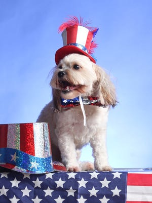 Patriotic Pets Day at The News-Press.