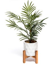 44015_MA_POTTED_PLANT_041-SR