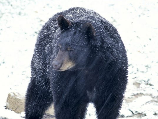 bearhunt.jpg