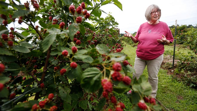 Jessie Cox, owner of Ray's Farm to Market, talks about her blackberry crop at her Mt. Vernon farm.