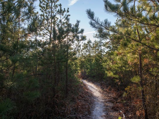 Jakes Branch County Park offers both active and passive
