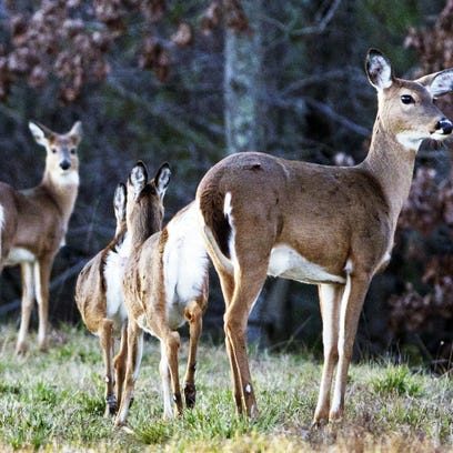 The number of white-tailed deer harvested across North Carolina during the 2014-2015 hunting season was the lowest in a decade.