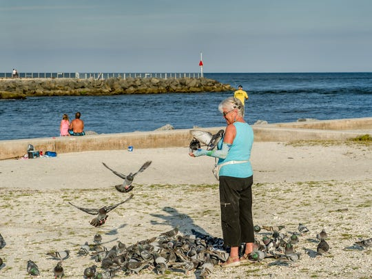 Some of the birds returning to Lori Weik appear as old friends - coming to whereshe feeds them daily, with a backdrop of Jupiter Inlet.