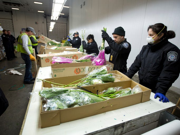In this Jan. 9, 2014 photo, a group of U.S. Customs and Border Protection officials check imported flowers at Miami International Airport.