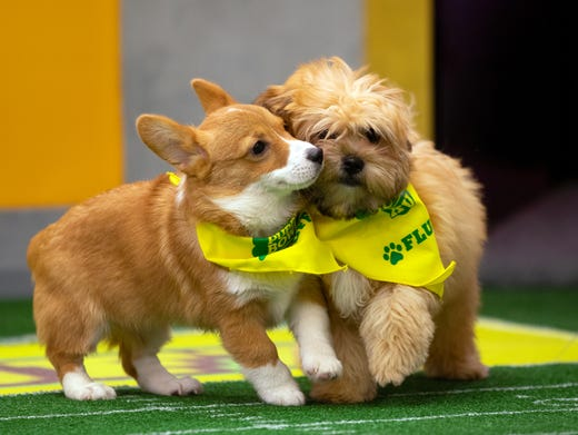Puppy Bowl Xv Local Dogs Featured In Animal Planet Super Bowl