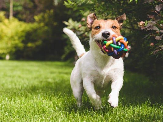 STOCKIMAGE-Dog