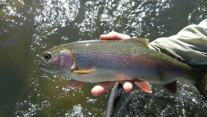 The East Walker River has been stocked with 30,000 trout.
