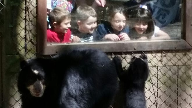 Kids get a look at the Andean bear cub and her mum at Salisbury Zoo.