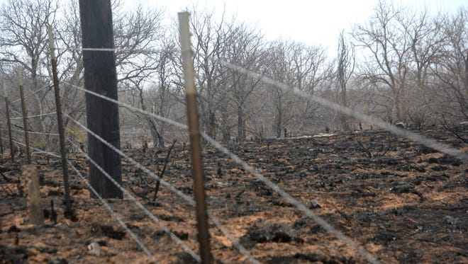 Intense flames sweeping away grassland may not have damaged the barbed wire on fences surrounding pastures.
