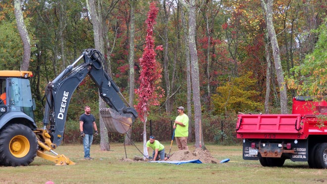 A crew plants a tree at the Portsmouth Dog Park on Monday.