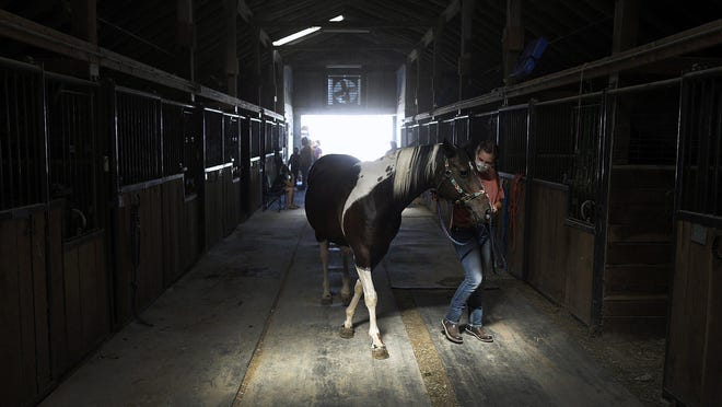 Riley DaRe, 13, moves her horse, Raven, into a stall during the Union County Fair in Marysville Wednesday.