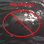 The Lake Ontario shark video was a hoax.