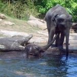 STL Zoo among best in the world