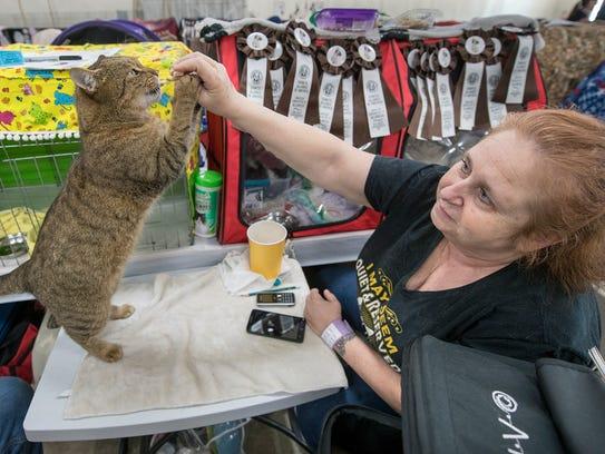 Bob the cat gets a chicken treat from Rennie Hoffer