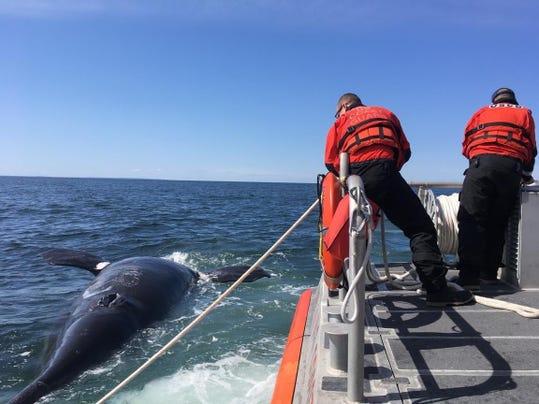 Whale Deaths