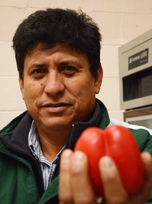 Filiberto Villa Gomez is the president of a Mexican farmer's co-op, Farmer's on the Move, holds up a red pepper at his facility on Lakeview Avenue.
