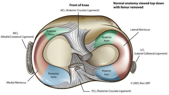 The medial and lateral meniscus divided up