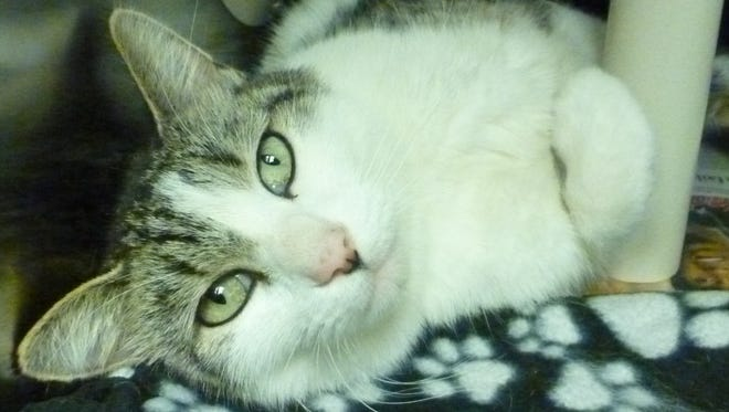 Rescue cat of the week: Jackson