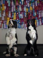 Aschley Kezeske, co-owner of Rufflers Dog University,