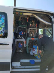Dogs and supplies are secured in Ringwood before a