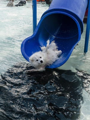 Hundreds of dogs came to City Park Pool on Monday for the annual Pooch Plunge.