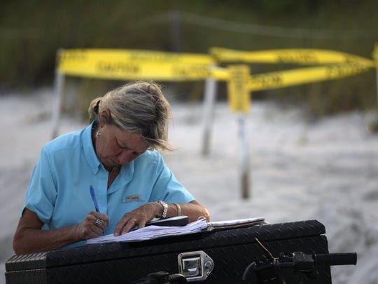 Maura Kraus fills out data on a nest that was identified on Parkshore Beach on June 15, 2011. The data will later help them estimate a hatching date and will help monitor the nests progress. Kraus has worked with Collier County Parks and Recreation and the Sea Turtle Protection Program for nearly 28 years. Kraus is issues a specific stretch of beach that she monitors for new nests and observes the conditions of already marked nests. The number of nesting site is high this season in comparison to seasons past, which is a good indication that numbers are increasing. Nesting season also started earlier this year with the first nest being found on April 27, about a week earlier than prior years. The traditional nesting season for the sea turtles starts the first week in May and goes through August and the hatching season continues well into October. The egg in normal conditions will hatch approximately 60 days from the laying of the eggs.