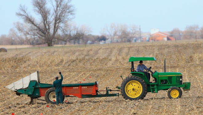 Richard Little, research technologist with the University of Nebraska-Lincoln, right, operates a spreader in a field near Mead, Neb., Monday, March 30, 2015. The USDA releases its annual prospective planting report on Tuesday, March 31, 2015, which outlines farmer decisions about how much land to dedicate to corn, soybeans and other major crops including wheat and cotton.