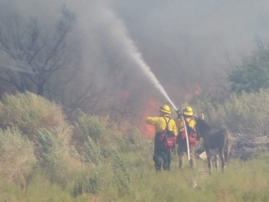 Lone donkey gets refuge from fire