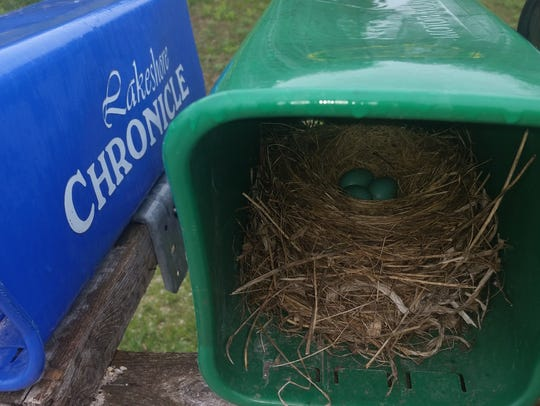 Robins have been known to nest in the most unlikely