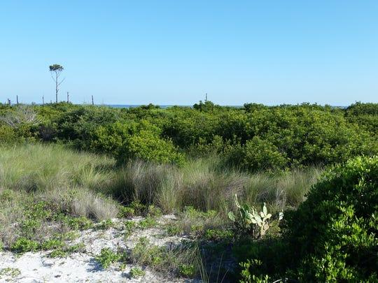Stopover foraging habitat for migrating songbirds includes scrub-shrub habitat along the beach.