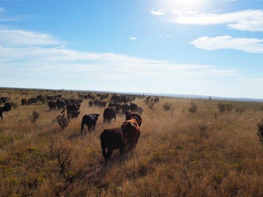 636046251165150613-cattlepasture.jpg