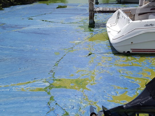 """The gooey, stinky algae from 2016 in Central Marine Stuart's basin actually turned bright blue at one point and became about """"8 inches thick,"""" said Mary Radabaugh, manager of the boatyard."""
