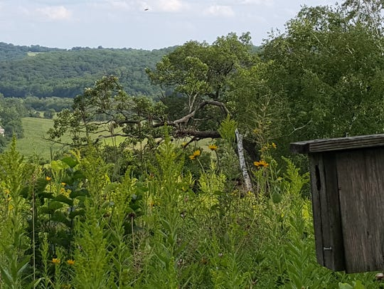 A birdhouse stands in the Pleasant Valley Conservancy
