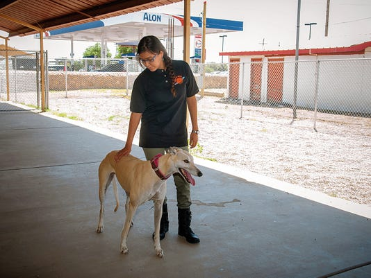Jett Loe--Sun-News   Your Pet Space employee Erika Washburn looks after 4-year-old rescue Greyhound 'Seba'.