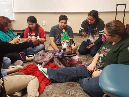 20161203-Therapy dog.jpg